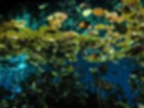 Cenote Diving Playa del Carmen Mexico Tulum Cancun Scuba Diving Nicte Ha