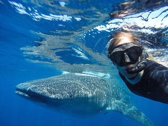 Whale Sharks Playa del Carmen Mexico Cancun Tulum