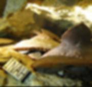 Cave Dive Mexico Playa del Carmen Cancun Tulum