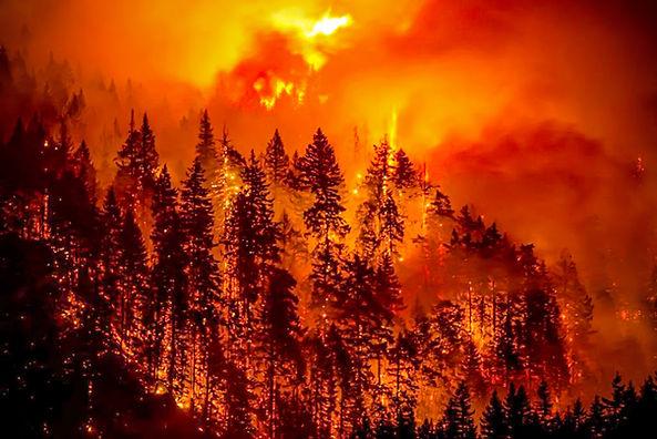 Eagle Creek Fire_World Forestry Center.j