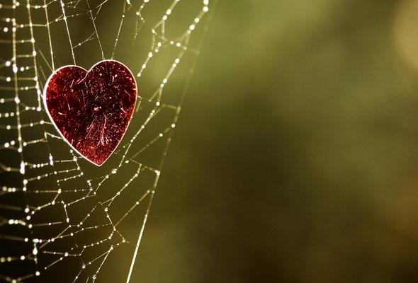 The Nettie Heart