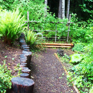 Forest Path to Pond