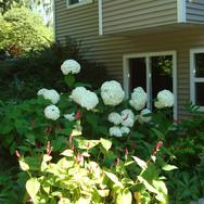 Guest Suite Garden