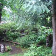 Forest Path Lower Garden