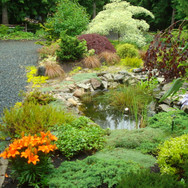 Front Garden Koi Pond