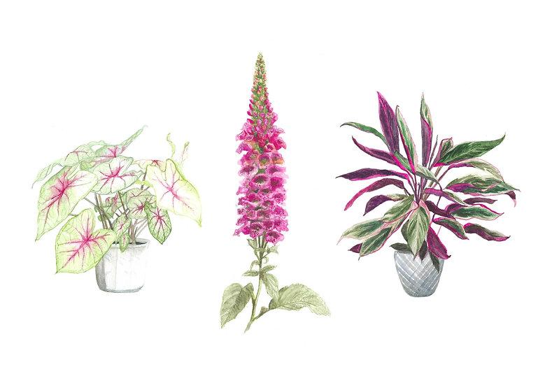 Pink Plant Series 3