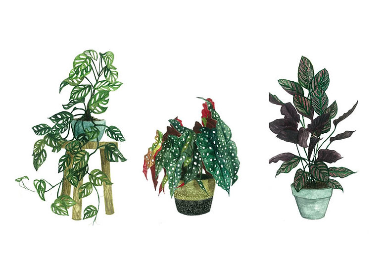 Houseplant series 2