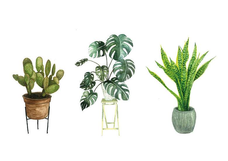 Houseplant series 1