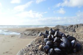 Tregantle Beach