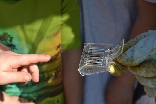 Kita-Gruppen zu Besuch bei den Schulbienen