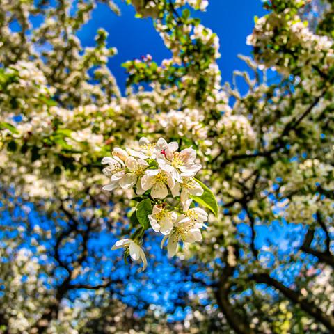 Incredible blooming trees in the Gardn