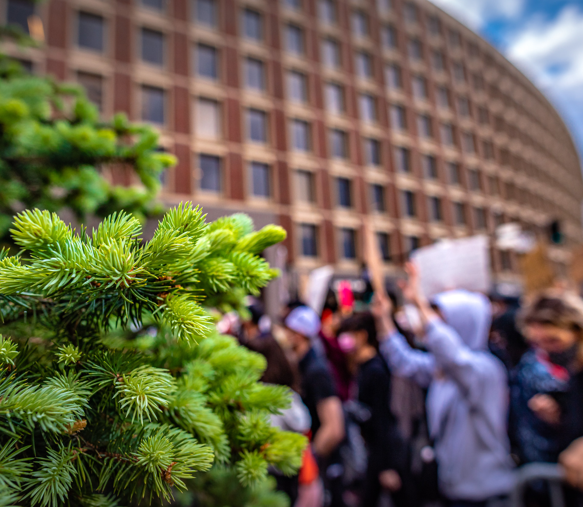 A little macro wide angle protest, from the perspective of an evergreen.