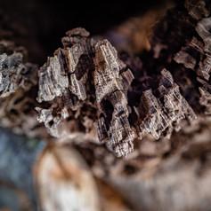 I love tree bark.