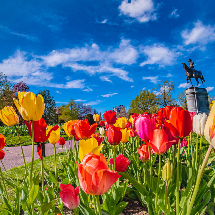 More of George Washington on his horse in the tulips.