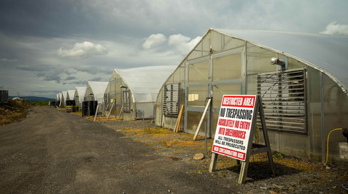 Secured Greenhouse.jpg