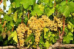 Debit grape