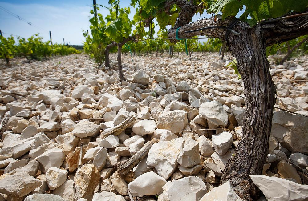 Stina Vineyards