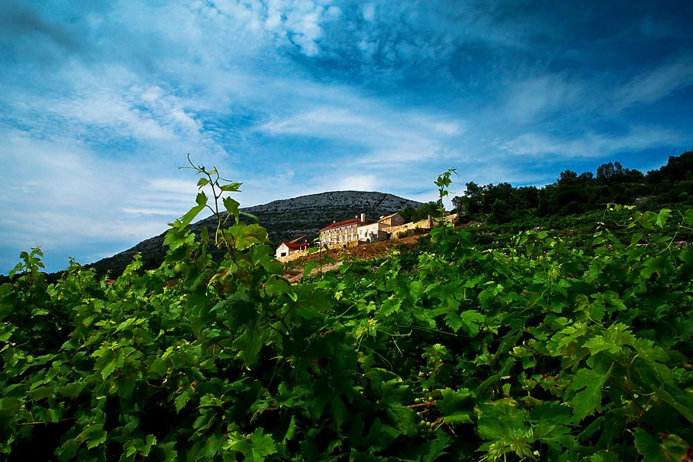 Saints Hills Winery