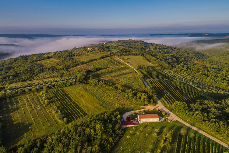 Clai Winery - wines available in Ontario