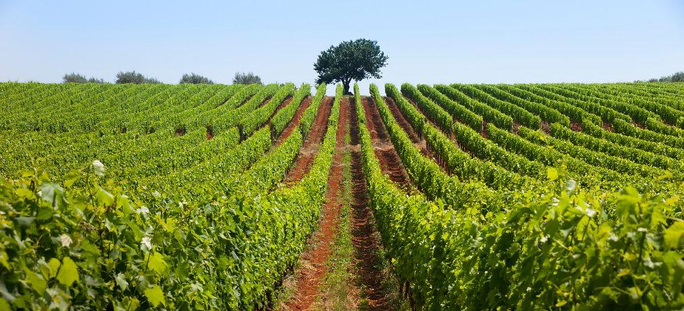 Croatia Unpacked - Croatian Wine in Ontario