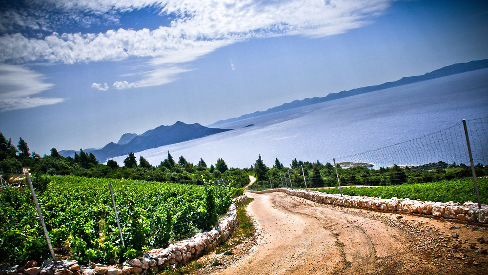Saints Hills vineyards - Dalmatia