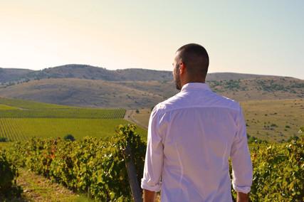Testament Winery - Juraj Sladić