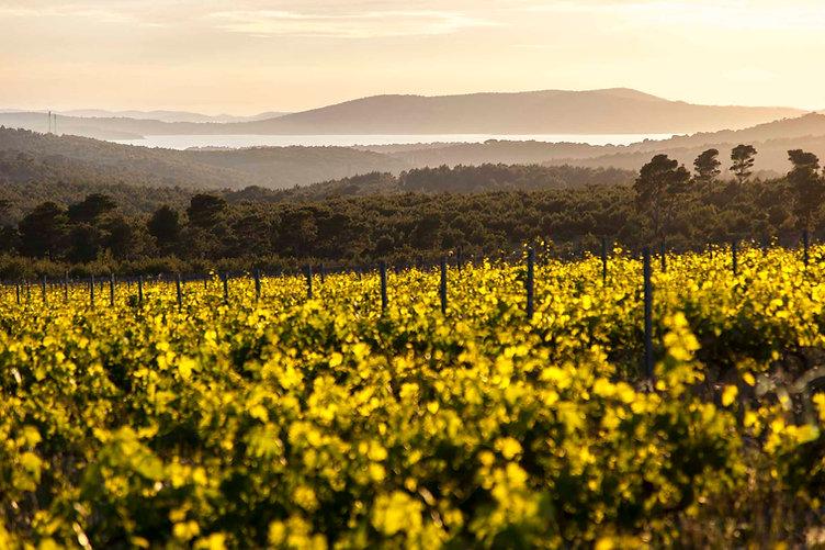 Testament - Vineyards and Adriatic