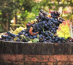 Croatian Grapes