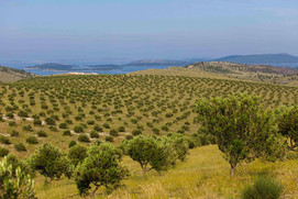 Testament Winery - view on the Adriatic