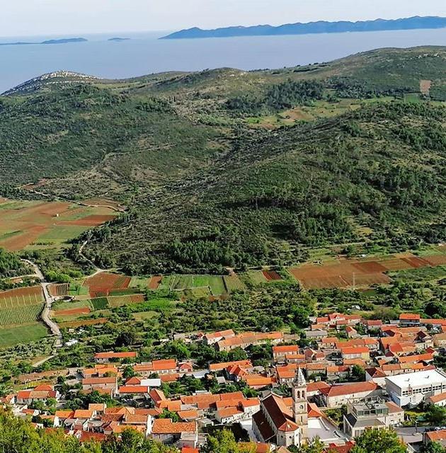 Black Island Winery - Aerial view - Vine