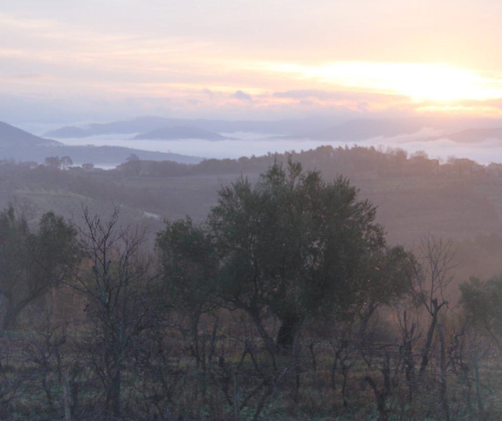 View over Motovun forrests ... the home of the Istrian truffle