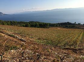 Natalie Maclean blog - Croatian wine