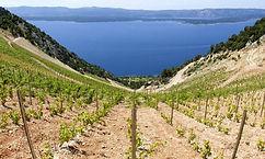 Croatian Wine - Dalmatia