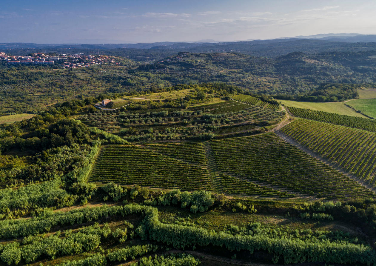 Clai - Aerial view - Vineyards of Green