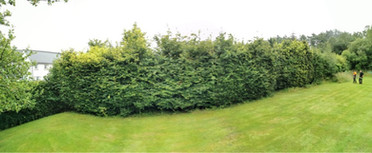 Hedge Pruning Before