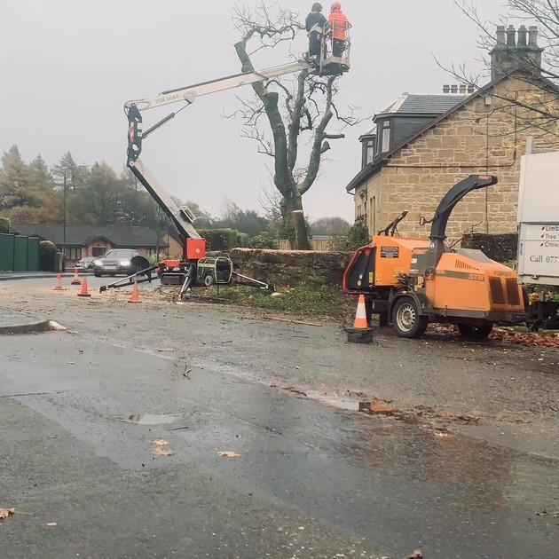 Ash Tree Dismantle Slide 5