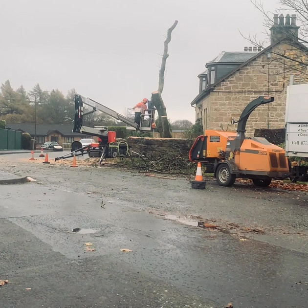 Ash Tree Dismantle Slide 7