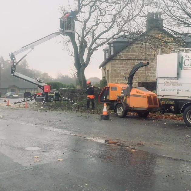 Ash Tree Dismantle Slide 4