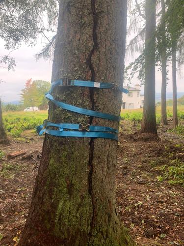 Douglas Fir Tree Before