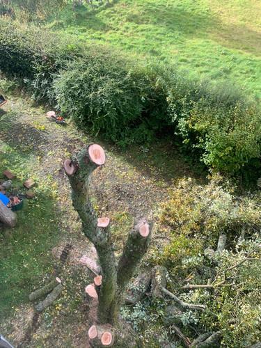 Multi Stem Tree Maintenance During