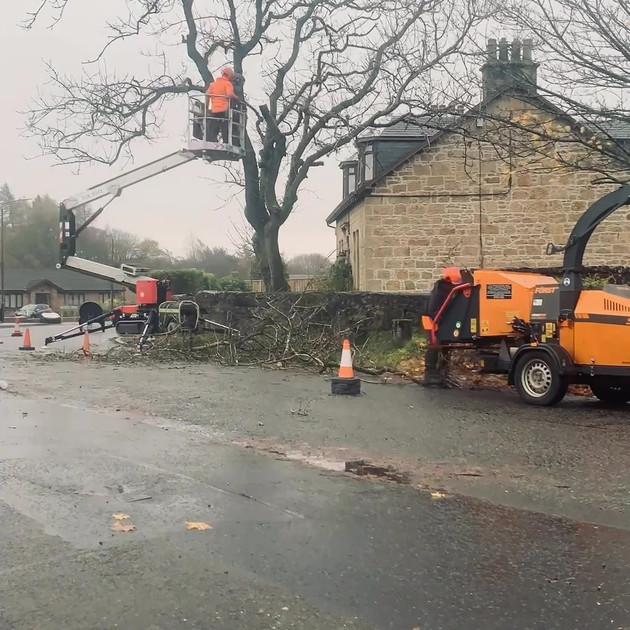 Ash Tree Dismantle Slide 2