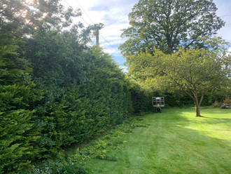 Hedge Pruning During