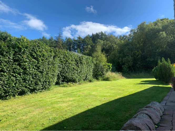 Hedge Pruning After