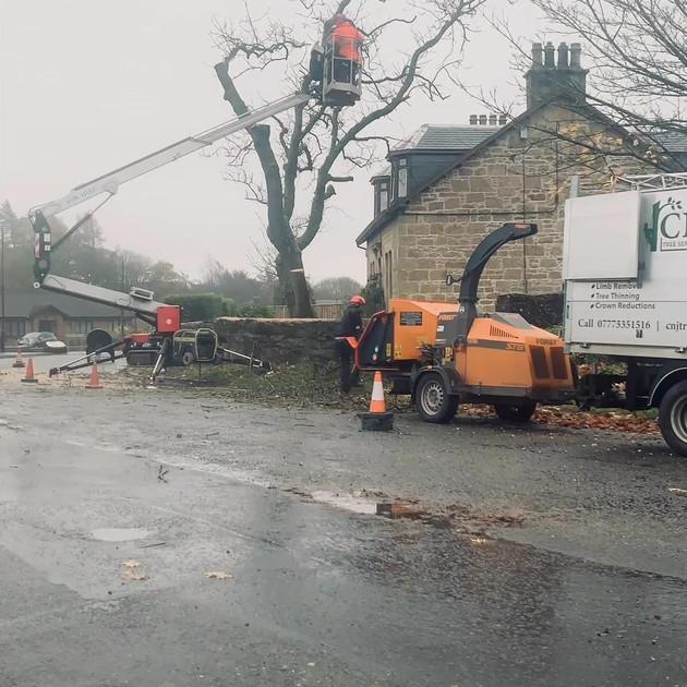 Ash Tree Dismantle Slide 3