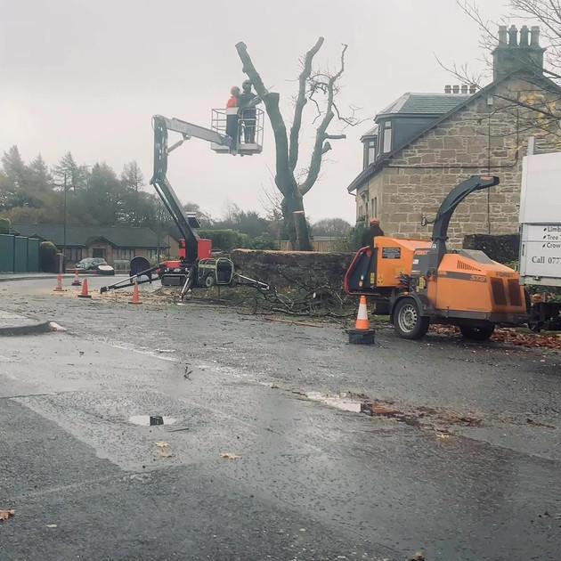 Ash Tree Dismantle Slide 6