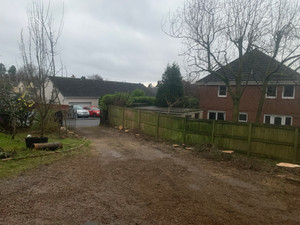 Driveway Tree Pruning During After