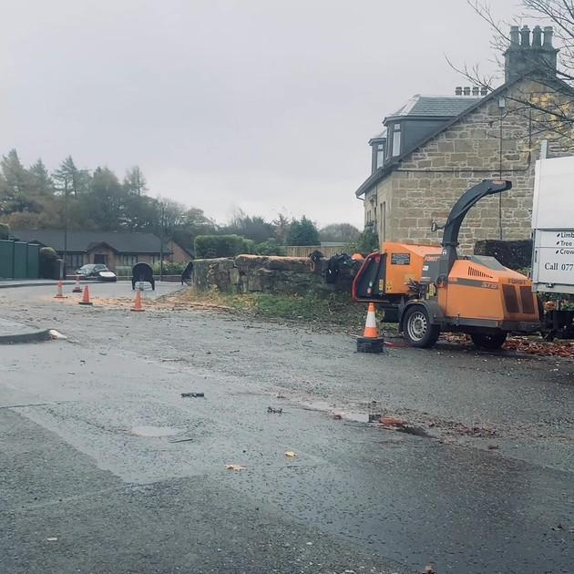 Ash Tree Dismantle Slide 9