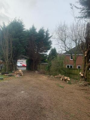 Driveway Tree Pruning During