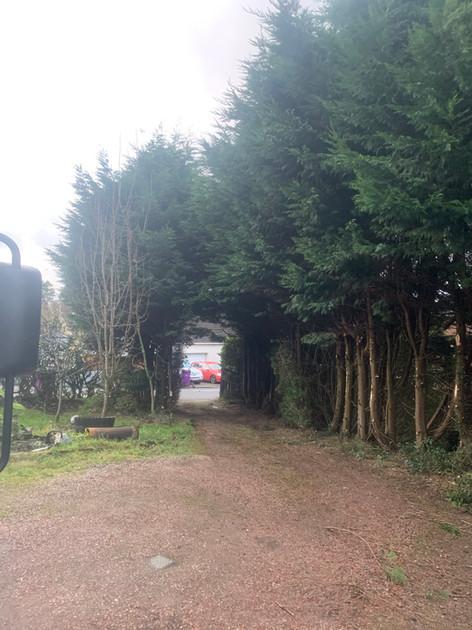 Driveway Tree Pruning Before