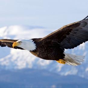 La leçon de l'aigle